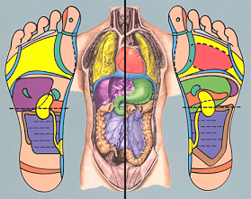 Reflexology Training & Certification Program - Ingham Method of ...