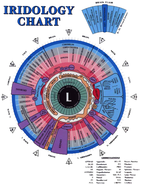 Iridology Chart of the Left Eye Iris