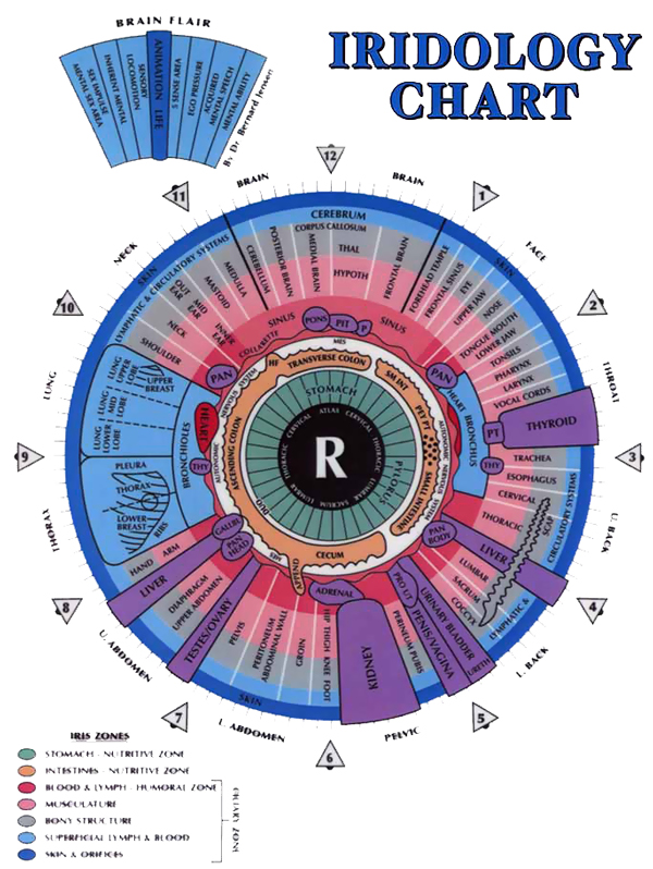 Iridology Chart of the Right Eye Iris